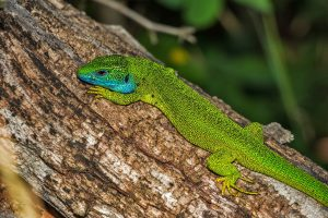 Babby sitting Riviera Maya how to teach your children to care for nature